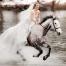 Hest-er-best_01_front_774x516px